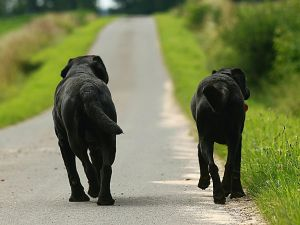 melatonin für hunde bei krebs